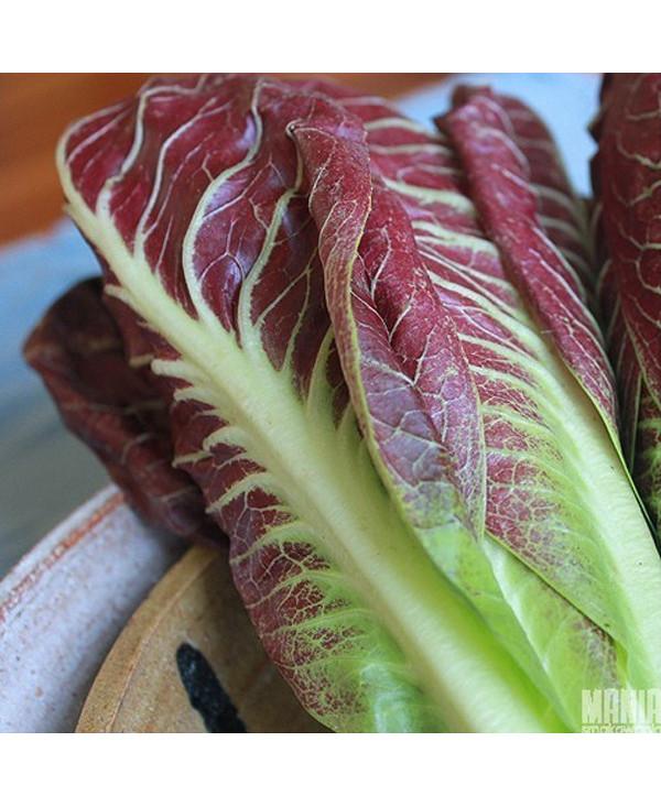 Makaron w sosie truskawkowym